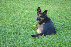 Esther Relaxes in the Back yard
