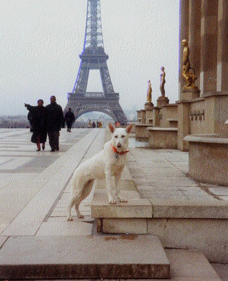 Frei in Paris
