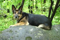 Esther in Pennsylvania Woods