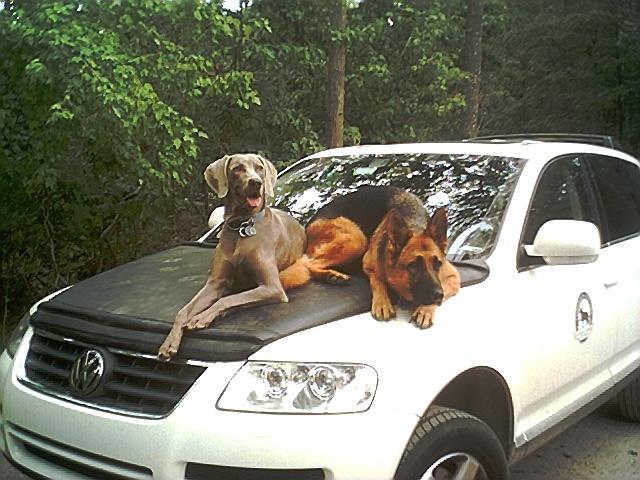 Violet and Jaxon on Hood of Car