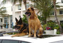 Esther and Riley on South Beach