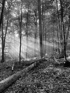 Morning Hike, Great Falls Park