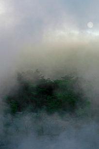 Fog on Cedars