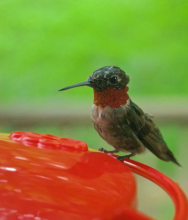 1-Watch+the+Birdie.jpg
