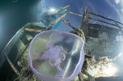 Jellyfish in front of partially submerged shipwreck in Majuro