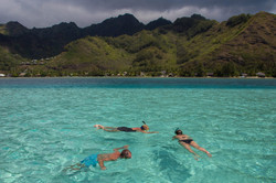 snorkeling with sting rays and black tip sharks in Moorea