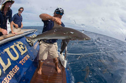 Richard grabbing sharks out of the water with his bare hands at Bikini Atoll