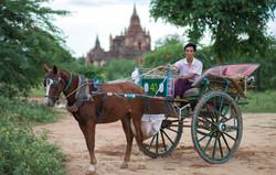 my horse cart driver in Bagan