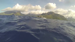 VIDEO_ swimming with Humpback Whales in Moorea