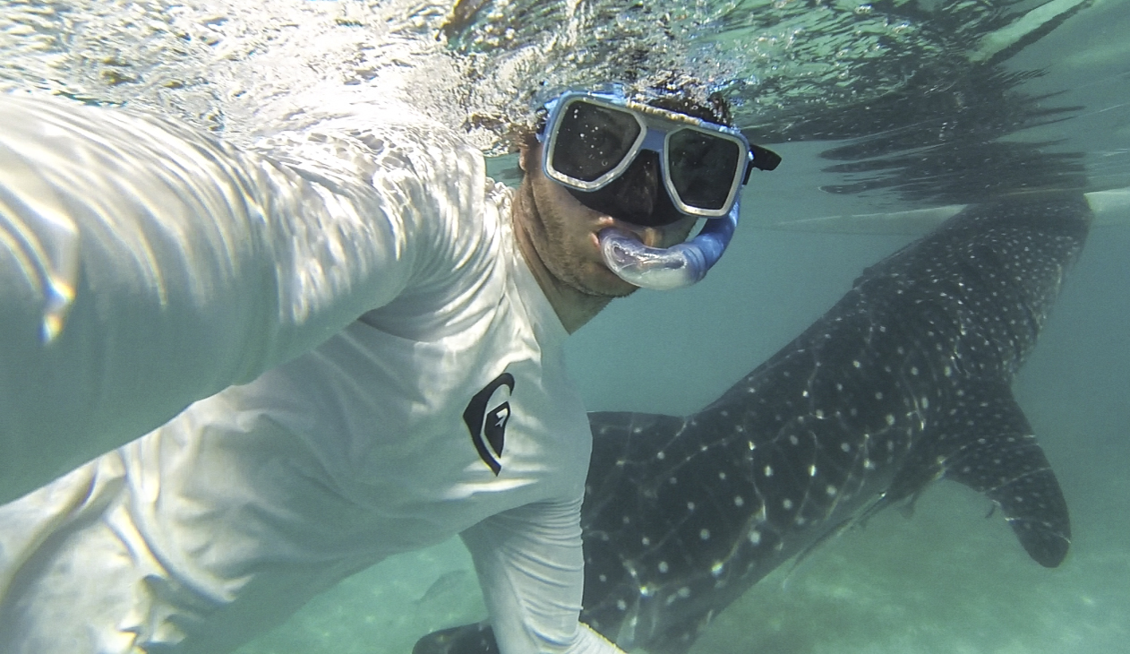 swimming with Whale Sharks around Cebu
