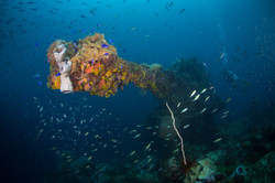 soft corals have taken over the 6 inch bow gun on the Fujikawa Maru