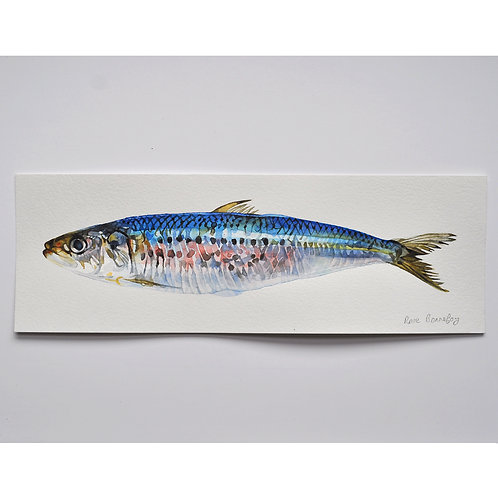 Aquarelle originale - sardine