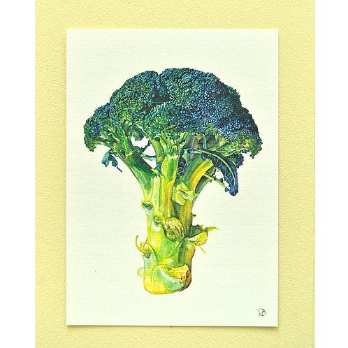 Carte brocolis