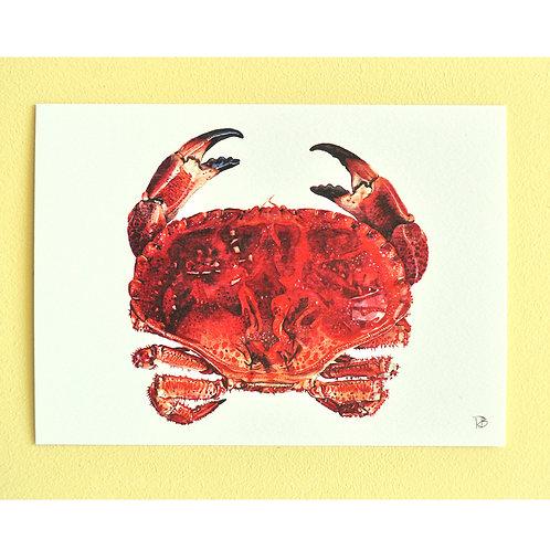 Carte crabe