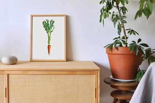 Reproduction carotte