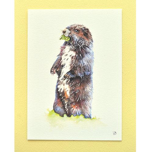 Carte marmotte