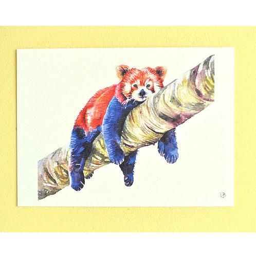 Carte panda roux