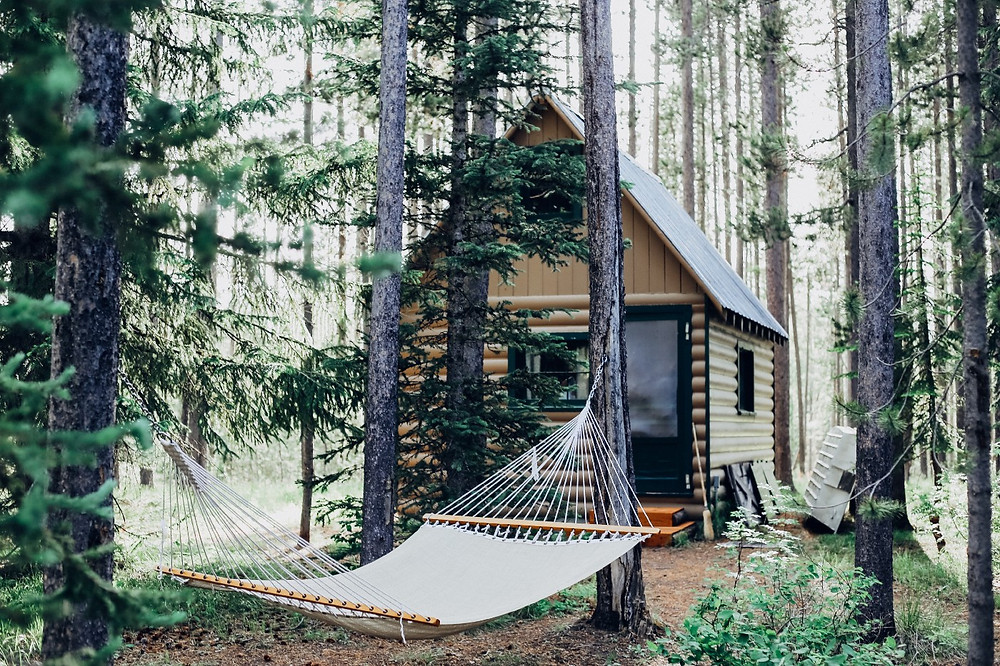 A cabin and a hammock in the woods.