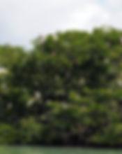 ilet oiseaux.jpg