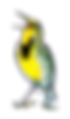 meadowlark for shirts (png)5.png