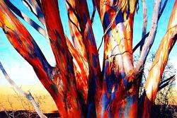 0702c108 -tree paintc.jpg