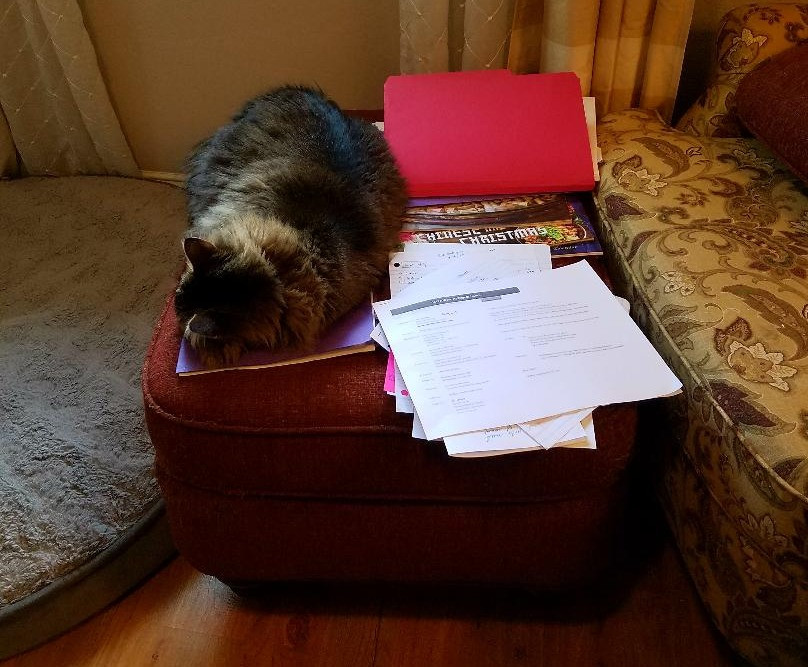 Holly Cortelyou's cat and a pile of clutter