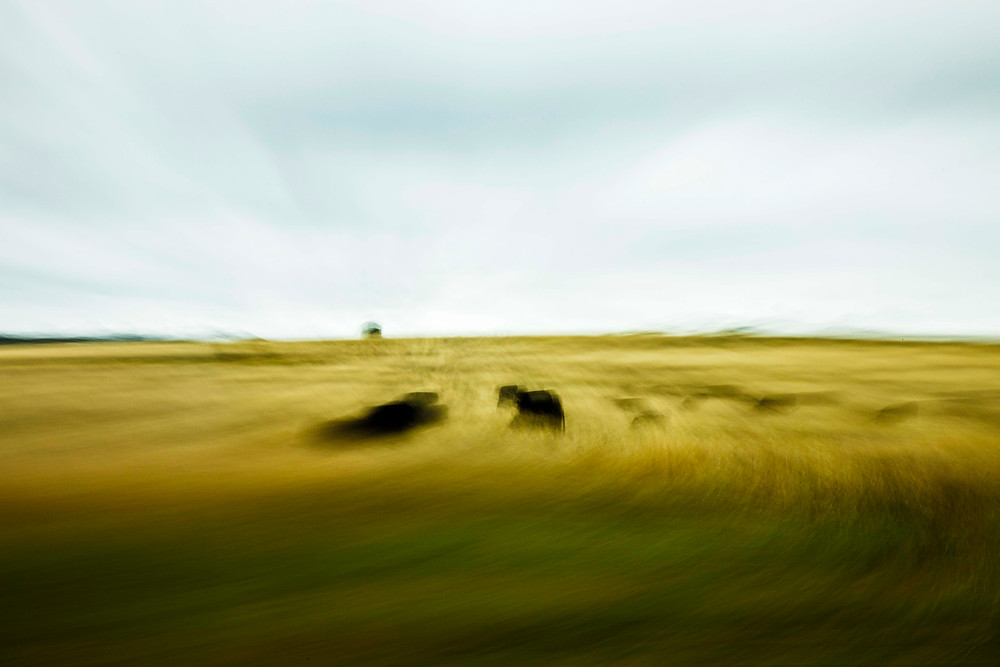 Cows graze in a rain-soaked field photographed with intentional camera movement (ICM).