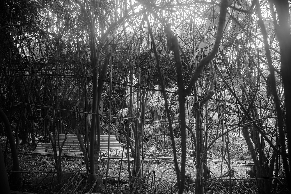 The silhouette of a tree line in the abandoned Jungle Park in Japan photographed by Megan Kennedy