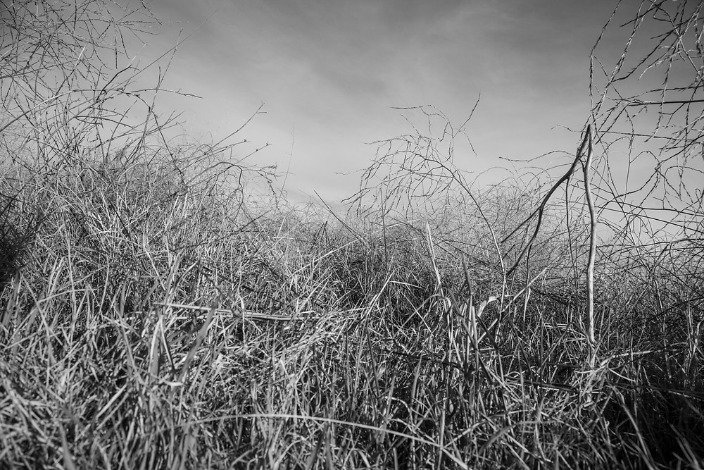 Grassy landscape near Canberra Airport in black and white by Megan Kennedy