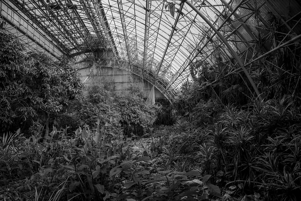 A giant abandoned greenhouse in Jungle Park in Japan, west of Tokyo. Found while urbexing. Photographed by Megan Kennedy