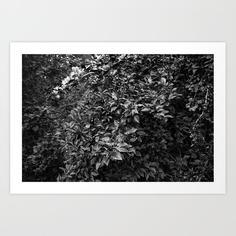 apple-tree4209409-prints.jpg