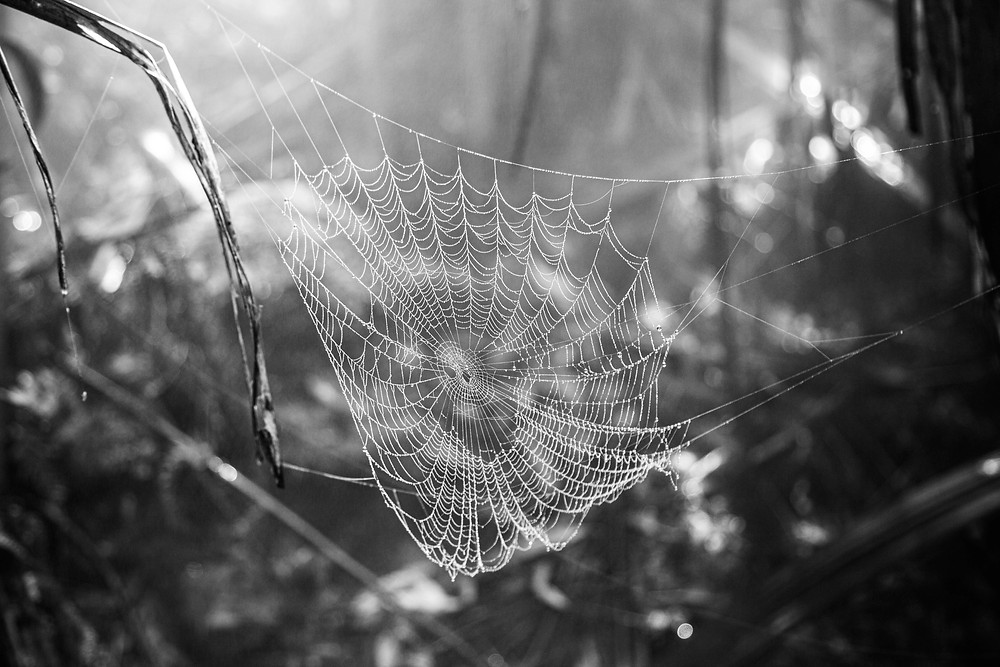 A rainforest spider web at the Australian National Botanic Gardens in Canberra.