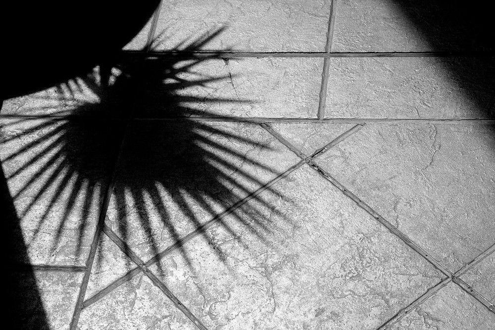 Black and white photograph of a plant shadow