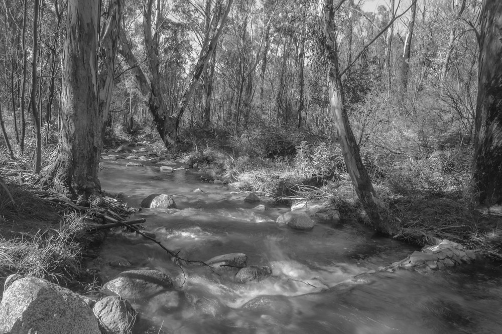 A black and white landscape photograph of Gibraltar Creek in the Namadgi National Park. Photographed by Megan Kennedy