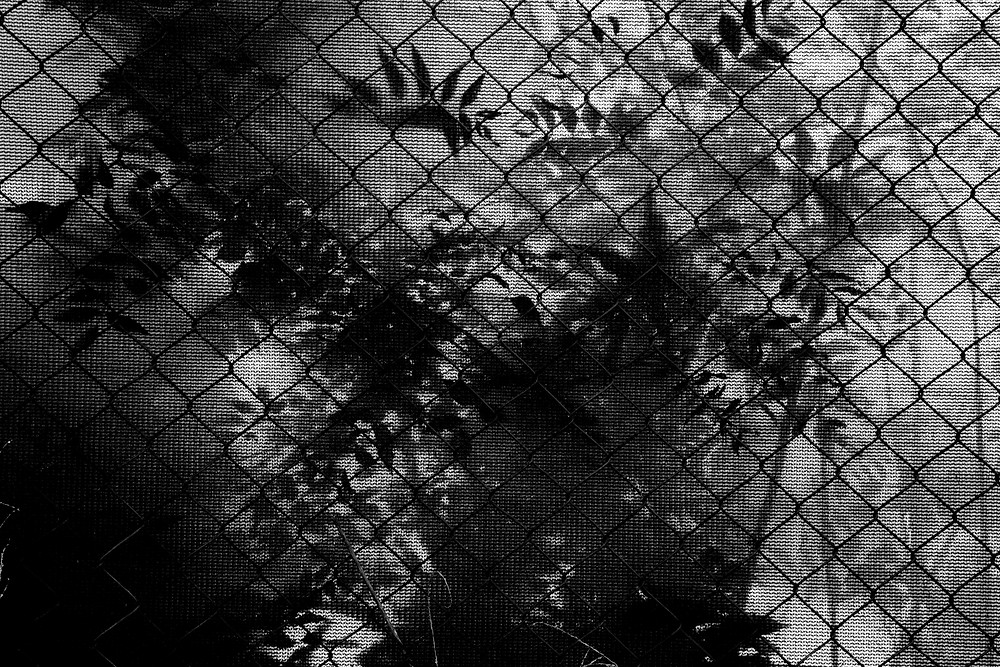 The silhouette of plant life leaning on construction mesh in black and white