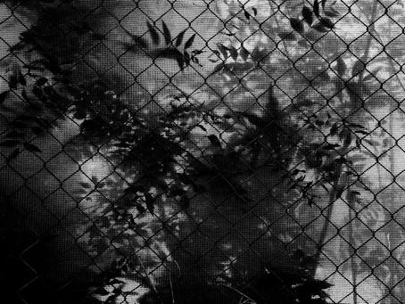 Photo Diary #41
