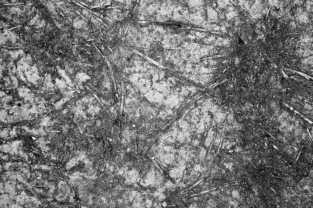 black and white roots of a desire path in Sydney Hyde Park