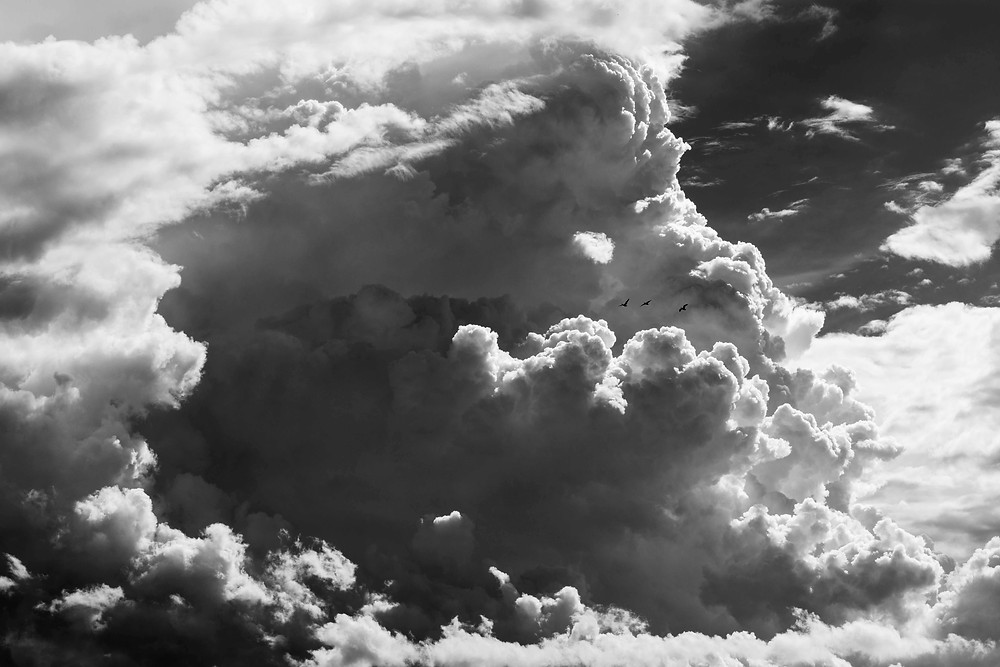 Three ducks fly before building storm clouds pictured in black and white