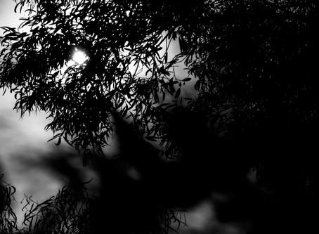 Untitled (Photo Diary #002)