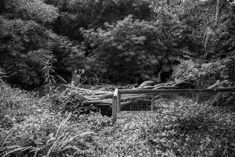 Found while urbexing the abandoned Jungle Park on the Irozaki Peninsula, Japan, trees collapsed in a pond. Photographed by Megan Kennedy