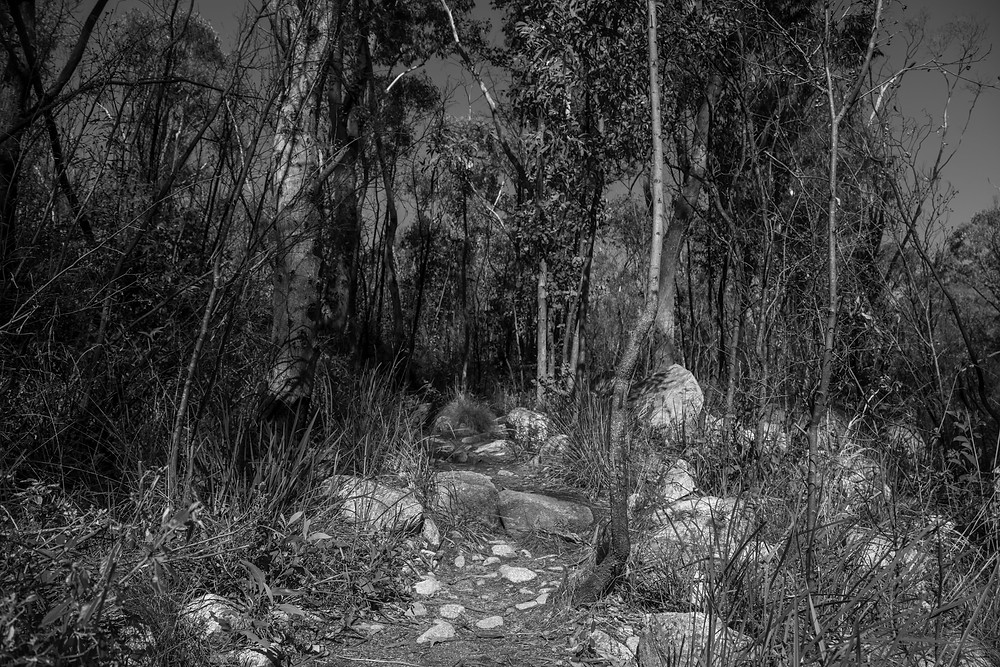 A black and white photograph rock formations and of Australian native plants in Tidbinbilla Nature Reserve. Photographed by Megan Kennedy.