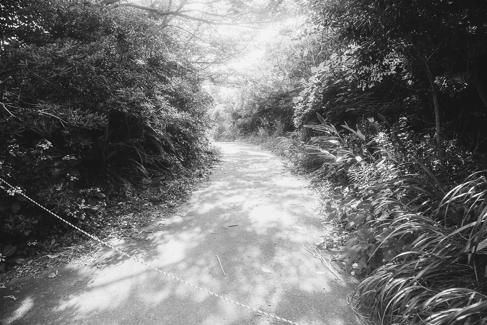 A black and white photograph depicting a path trailing off into dense greenery at the now-demolished Jungle Park in Japan. Photograph by Megan Kennedy.