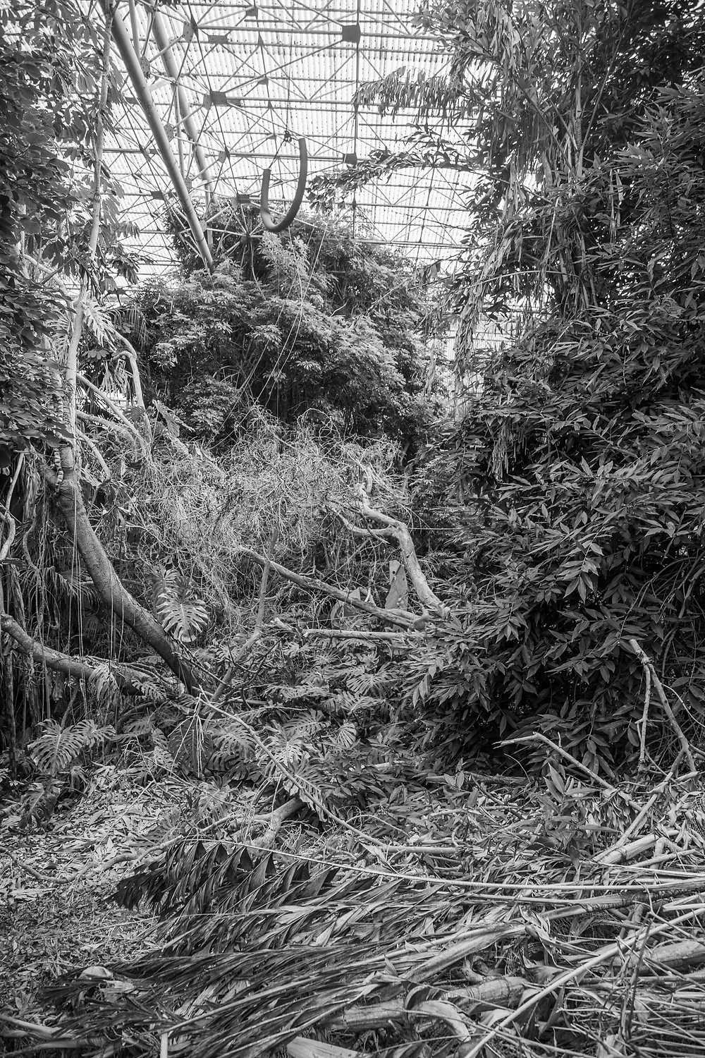 A portrait of collapsed trees in the demolished Jungle Park in Japan, west of Tokyo. Photograph by Megan Kennedy.