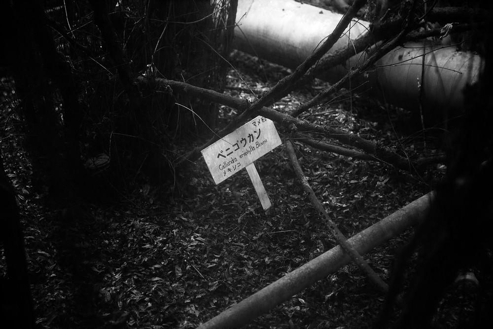 Abandoned Jungle Park on the Irozaki peninsula, Japan. A sign indicates a calliandra plant. Photographed by Megan Kennedy