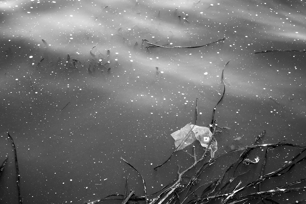 Lake Ginninderra detritus in a black and white photograph by Megan Kennedy