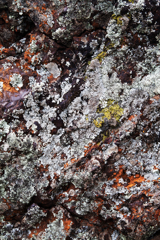 A lichen-covered boulder (left) photographed on a rocky outcrop at Gubur Dhaura, the Ngunnawal name for ochre ground.