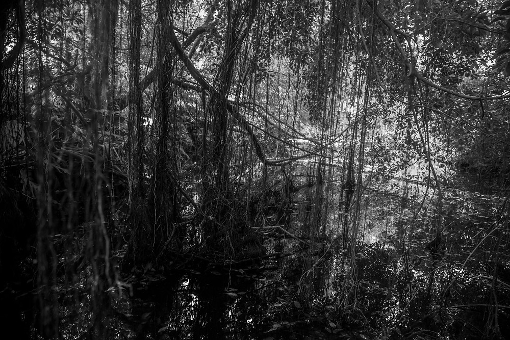 Vines dip into a pond in black and white photographed by Megan Kennedy