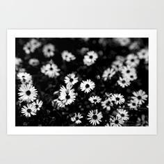 swan-river-daisies-prints-kennedy.jpg