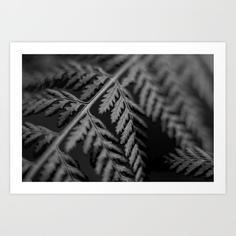 Botanical_study_fern_kennedy_print.jpg