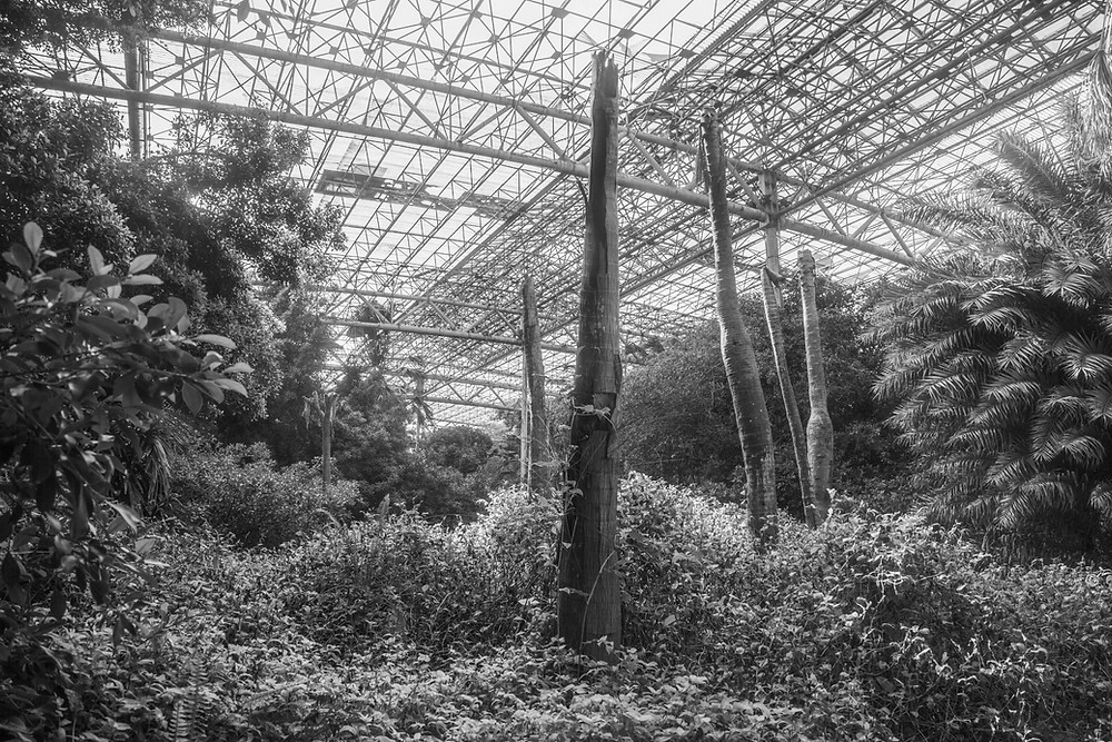 Lopped trees beneath the huge greenhouse structures of  the abandoned Jungle Park in Japan. Photography by Megan Kennedy
